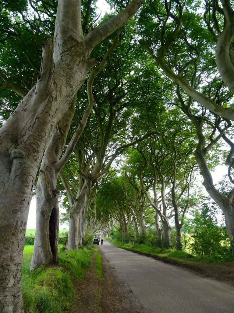 Irlanda Dark Hedges  location del trono di spade