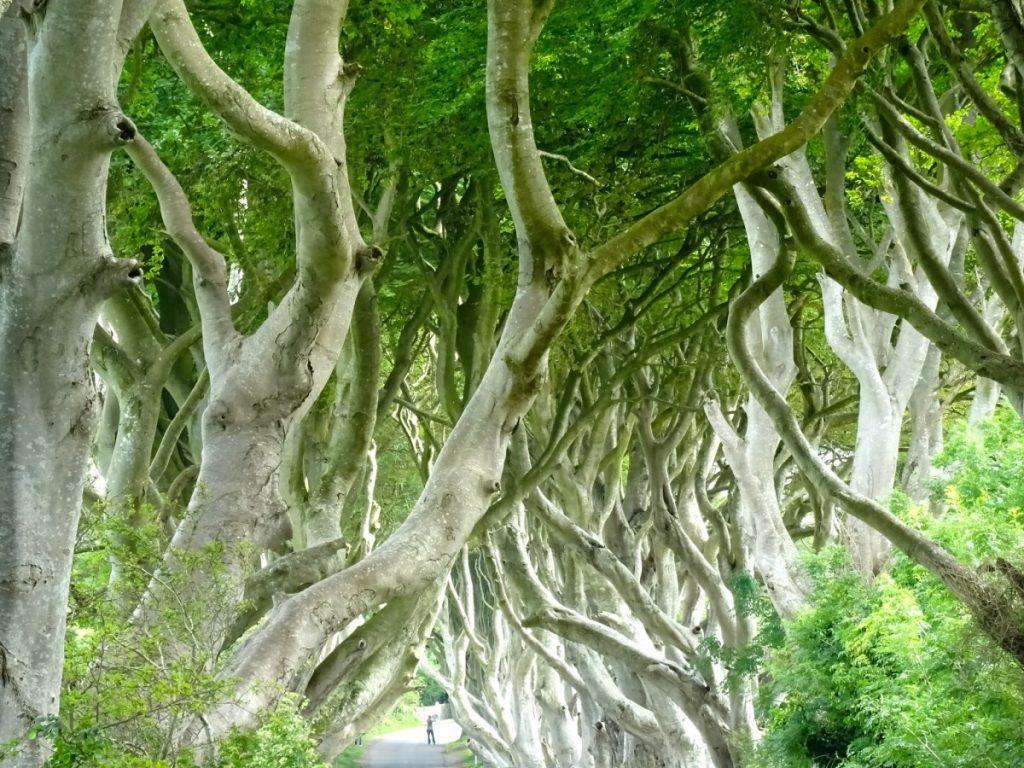 Irlanda Dark Hedges location del trono di spade per la strada del re