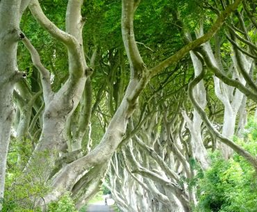 Irlanda Dark Hedges