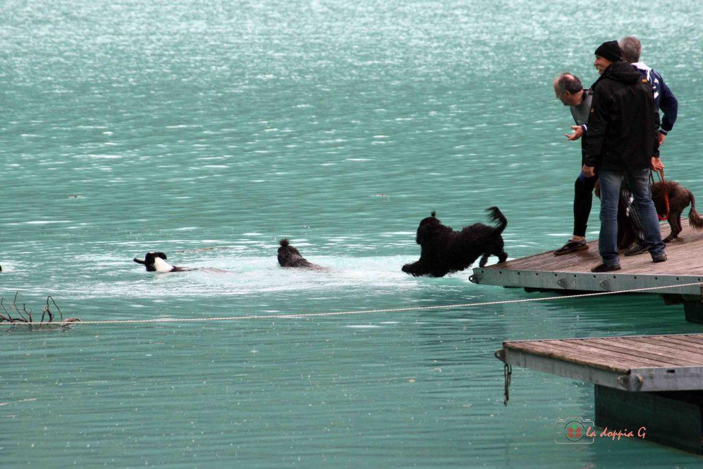 lago di barcis con il cane