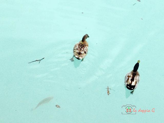 lago di barcis colore